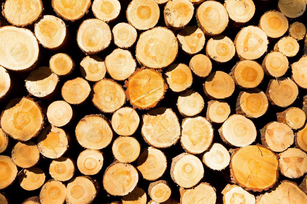 בולי עץ למכירה